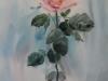 Роза 1. 2010г. 60Х40